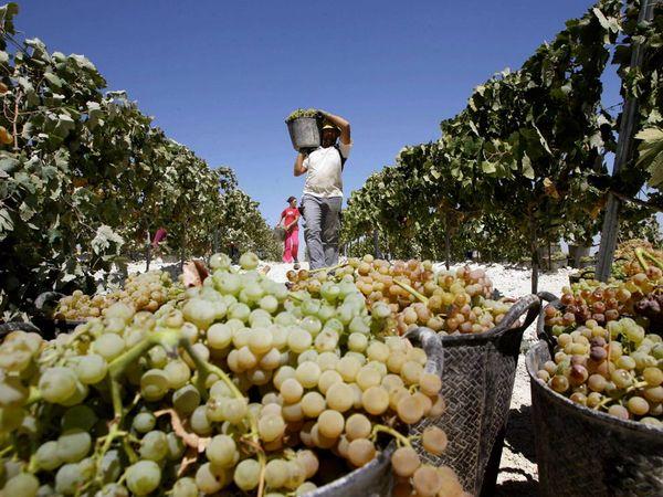 jerez-vineyard-worker_9130_600x450