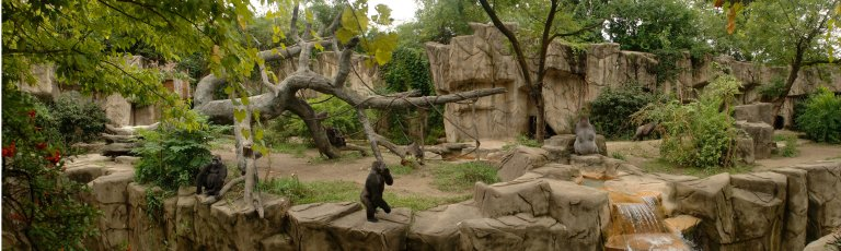 Gorilla-World.jpg