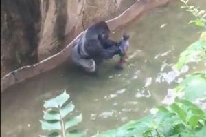 harambe-gorilla-zoo